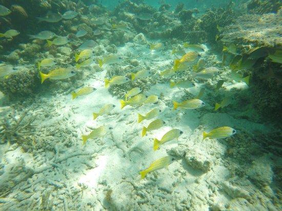 Maafushi Island: photo3.jpg