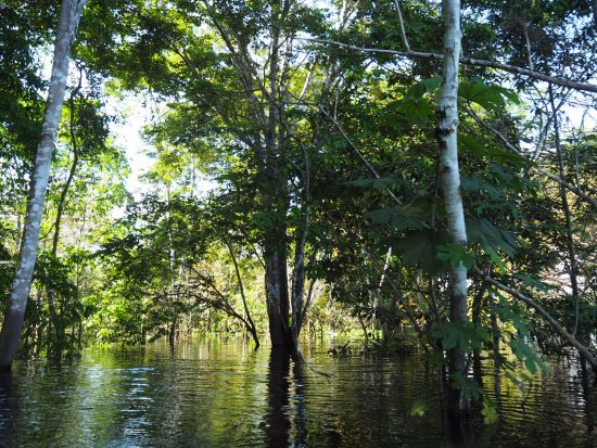 Amazon Backpackers : Flooded rainforest