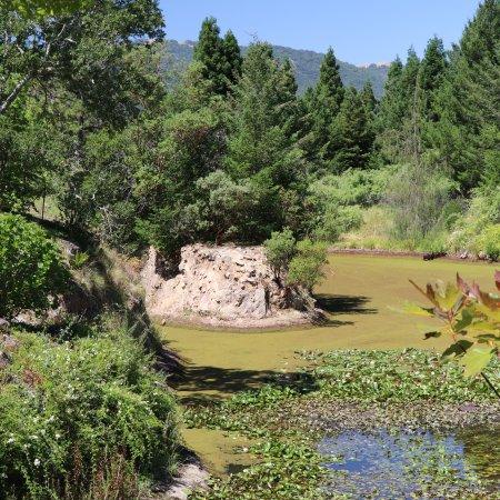 quarryhill botanical garden - Quarryhill Botanical Garden