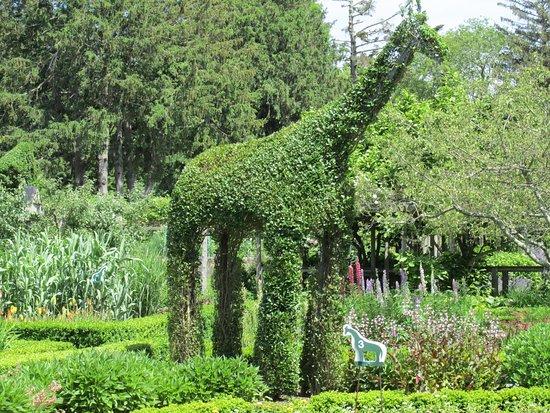 green animals topiary gardens giraffe - Green Animals Topiary Garden