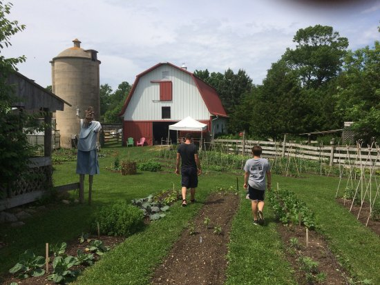 Baileys Harbor, WI: Lovely organic farm, friendly farmers, awesome meat eggs dairy and produce