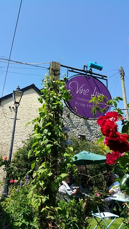 Honiton, UK: The vine