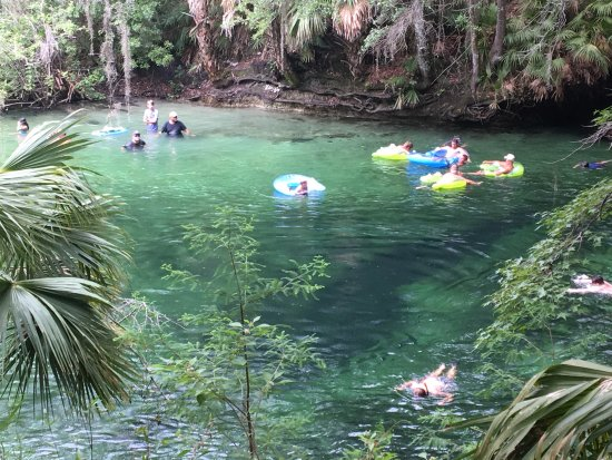 Orange City, FL: Wonderful cool place to relax and tube!
