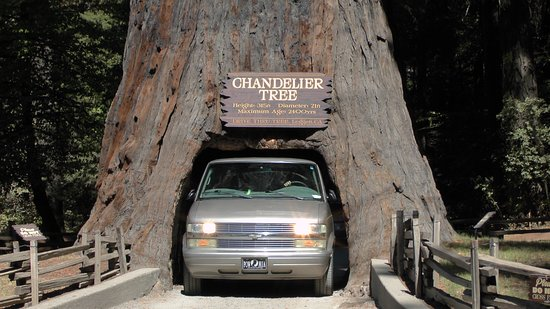 Tight squeeze for some picture of chandelier drive through tree chandelier drive through tree tight squeeze for some mozeypictures Image collections