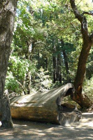 Leggett, Califórnia: Take a few minutes to explore