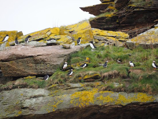 Big Bras d'Or, Canada: Puffins and razorbills nesting!