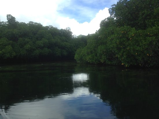 Kosrae, Federated States of Micronesia: Boat trip into the mangrove
