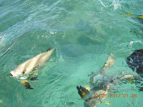 Fitzroy Island Reef Review