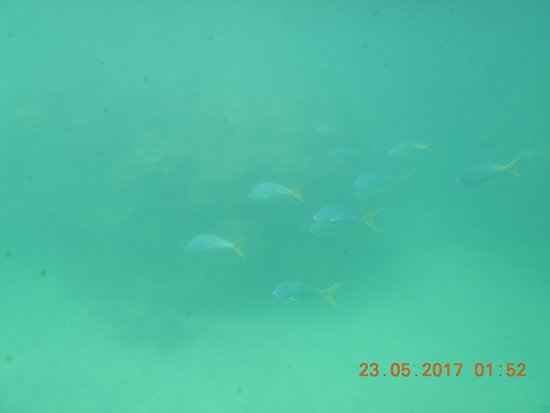 Fitzroy Island, Australien: Various fish n marines creatures as seen from Semi submarine
