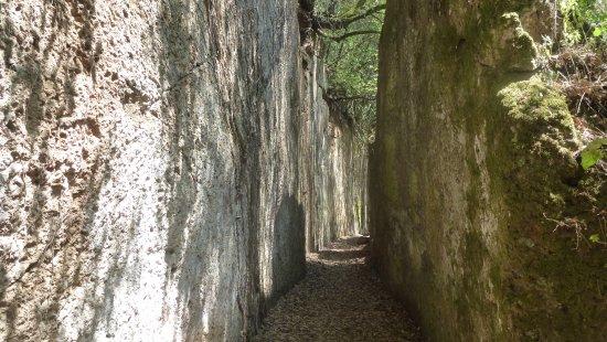 Corchiano, Italia: Una profonda tagliata etrusca.