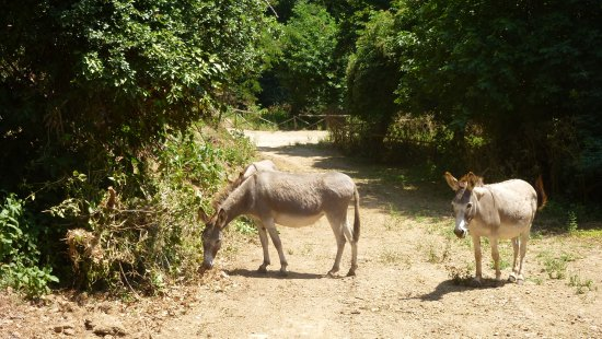 Corchiano, Italia: Asinelli bradi lungo il percorso.