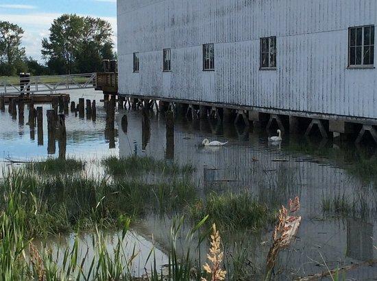 Britannia Shipyards National Historic Site: 昔ののシャケ缶詰工場