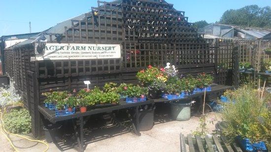 Ager Farm Nursery