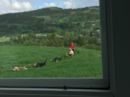 Nord-Trøndelag, Norge: Some pictures from our activities.