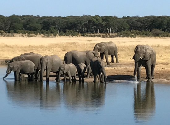 Hwange National Park, Zimbabwe: photo0.jpg