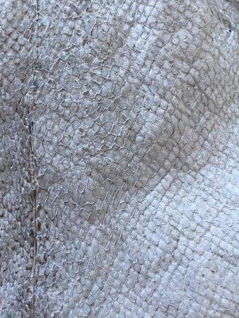 Saudarkrokur, Islandia: closeup of the fish leather