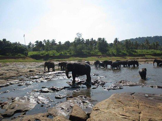 Pinnawala, Sri Lanka: FB_IMG_1497566122814_large.jpg