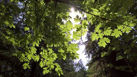 Port Alberni, Kanada: Leaves on trees