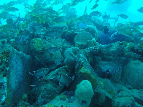 Frederiksted, St. Croix: So many fish on the pier, great dive made possible by Adventures in Diving STX!