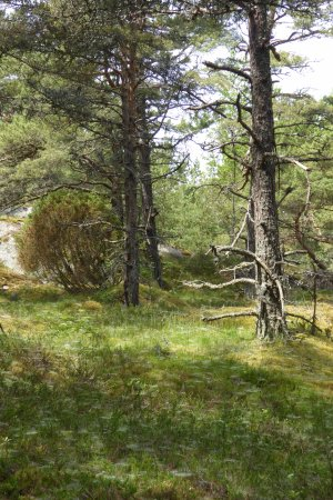 Hanko, Finlândia: Hundreds of spider webs in the grass