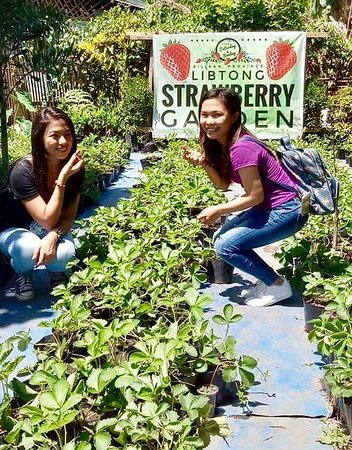 Naval, Philippines: Visitors at Libtong Strawberry Garden