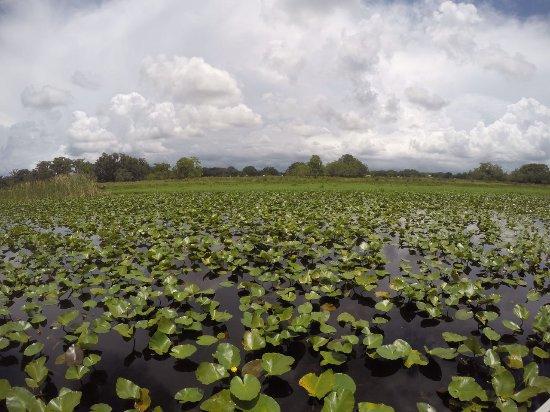 Kissimmee, FL: IMG-20170617-WA0002_large.jpg