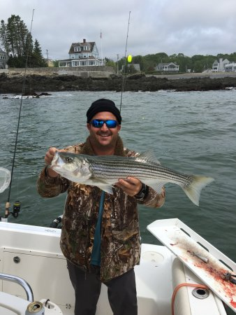 Kennebunkport, ME: Striped Bass