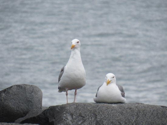 Ocean Shores, Вашингтон: North Jetty
