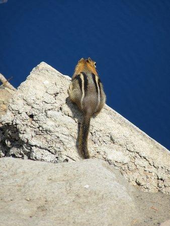 Rim Drive: Cute wildlife at Crater Lake National Park