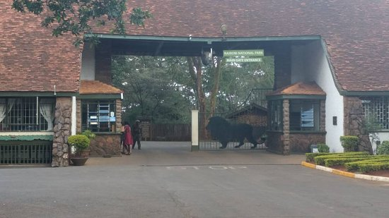 Nairobi Animal Orphanage: IMG-20170618-WA0022_large.jpg