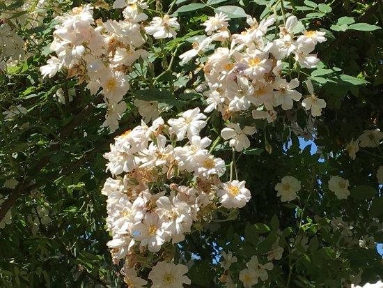 Mas rosas picture of folon e il giardino delle rose florence tripadvisor - Il giardino delle rose ...