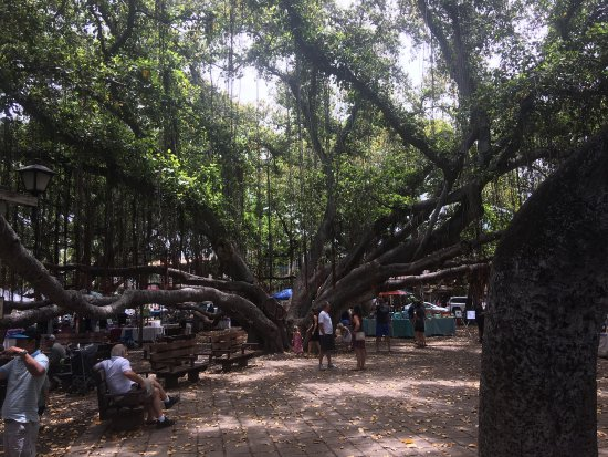 Banyan Tree Lahaina Craft Fair