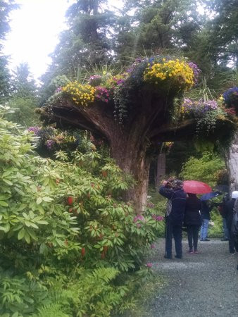 Glacier Gardens Rainforest Adventure: Fascinating uprooted trees turned upside down, planted in the ground, w/flowers.