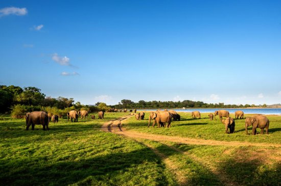 Tour Privado: Minneriya National Park...