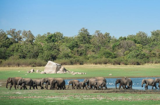 Private Tour: The Great Elephant...