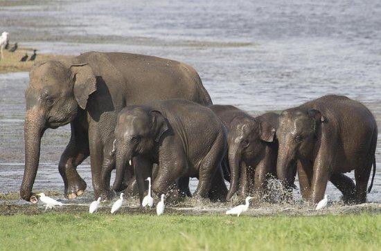 Visite privée: safari dans le parc...