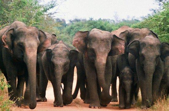 Excursion privée: safari dans le...