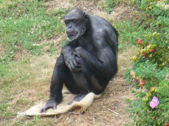 Hamilton Zoo: Being good