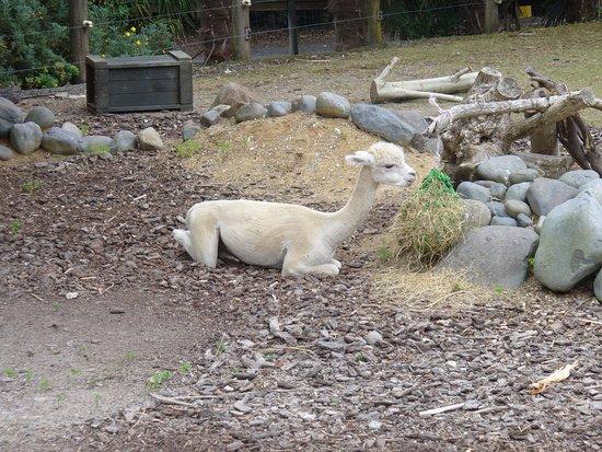 Hamilton Zoo: Sleep time