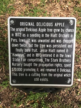 Storm Lake, Αϊόβα: Interesting Apple tree description