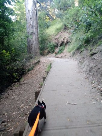 Oakland, CA: My dog enjoys this walk as much as I do