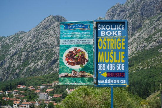 Orahovac, مونتينيغرو: Fresh oysters and mussels!