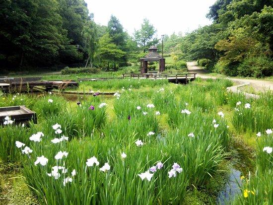 Kawachinagano, Japan: 菖蒲の遊歩道