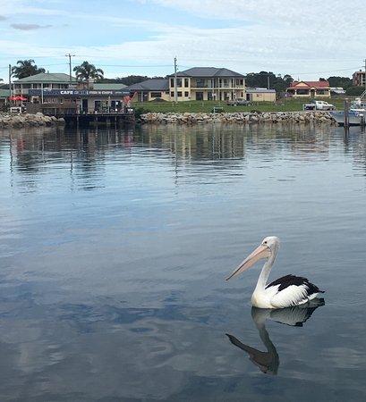 Bermagui, أستراليا: photo0.jpg