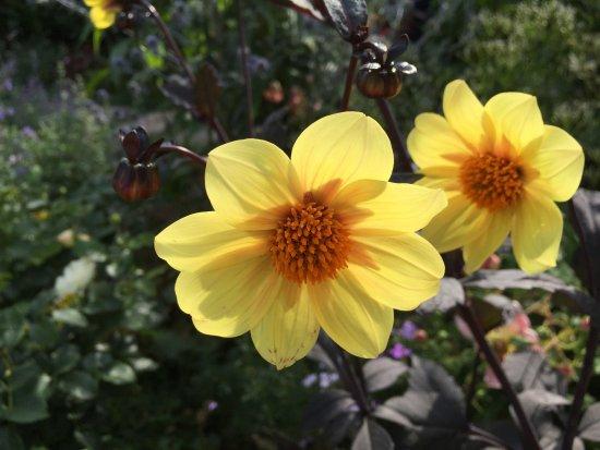 Harbor View Park: 素敵なお花ガーデンあり、おすすめ