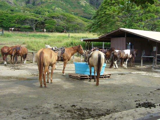 Kaneohe, Hawái: 乗馬ツアー用の馬舎