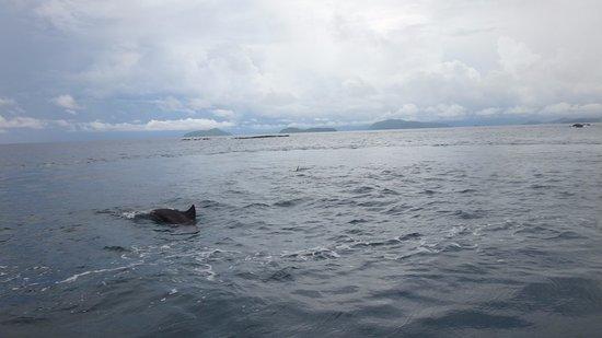 Maithon Island (Honeymoon Island) (Rawai, Thailand) - anmeldelser