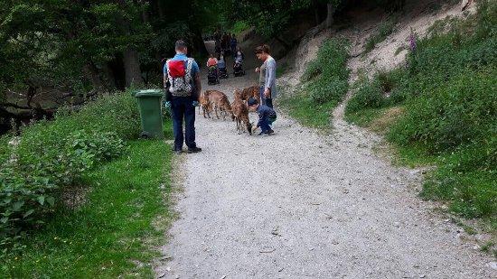 Rheinbollen, Allemagne : Hochwildschutzpark Hunsrück