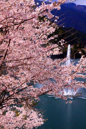 Mizukami-mura, Ιαπωνία: 春らんまん