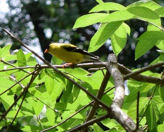 Cadiz, Kentucky: oiseaux
